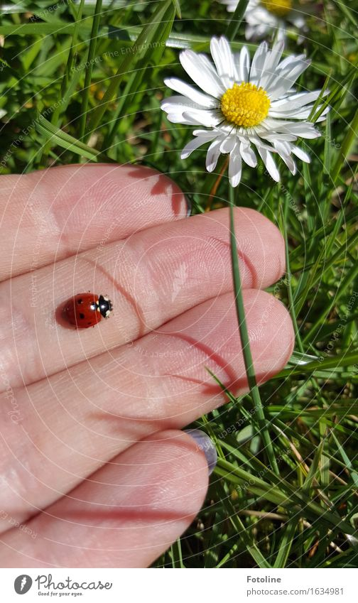 Off to freedom! Human being Hand Fingers Environment Nature Plant Animal Flower Grass Blossom Garden Park Meadow Beetle 1 Free Natural Yellow Green Red White