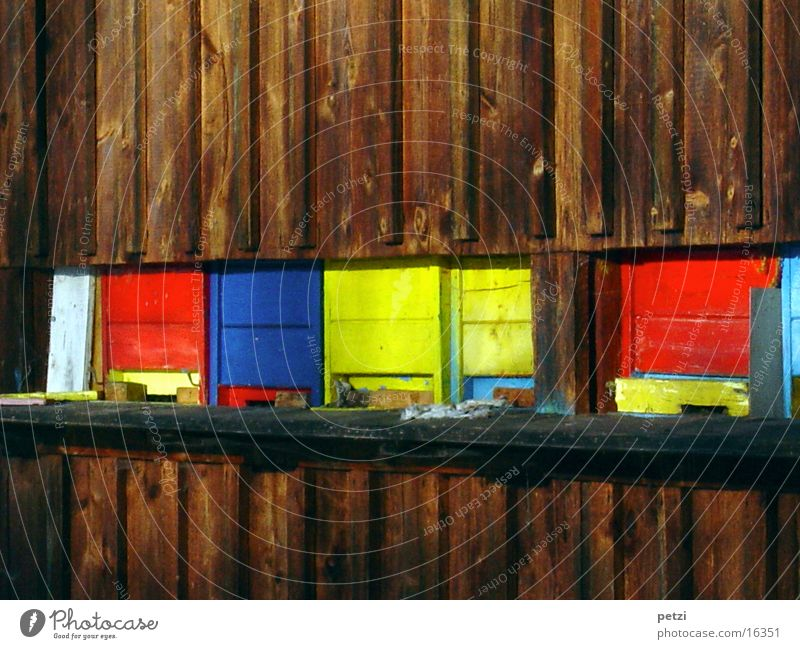 Colour Bee Wooden house