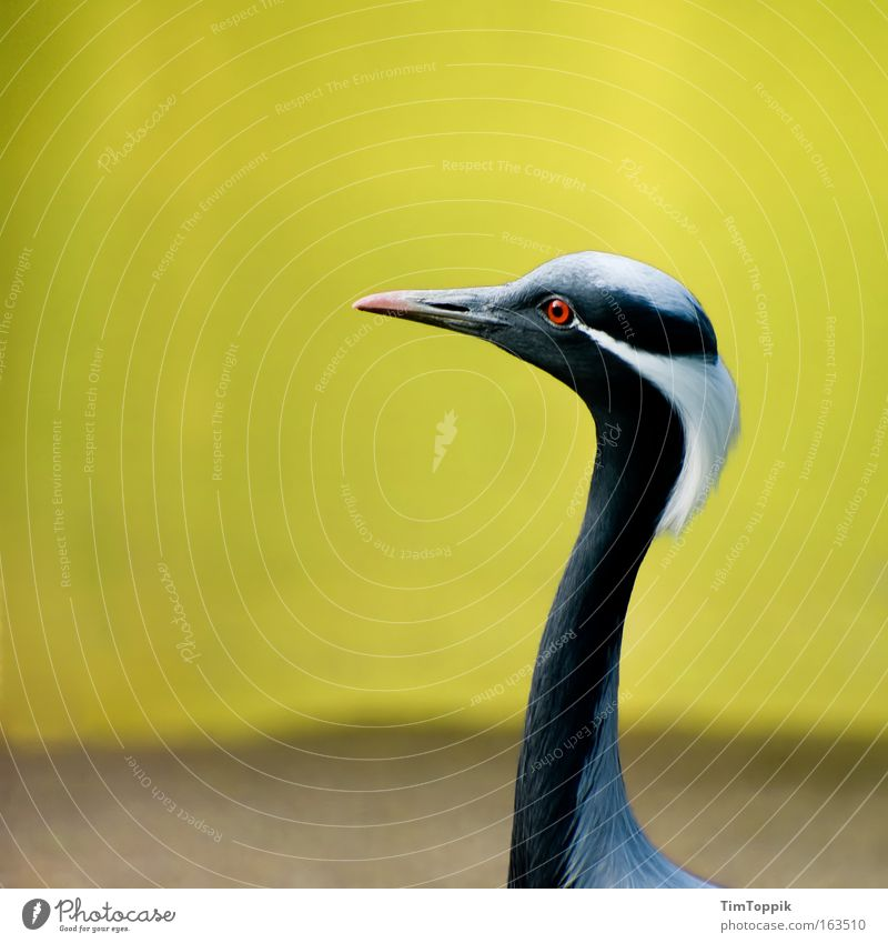 weird bird Colour photo Exterior shot Deserted Copy Space left Isolated Image Contrast Silhouette Shallow depth of field Central perspective Animal portrait
