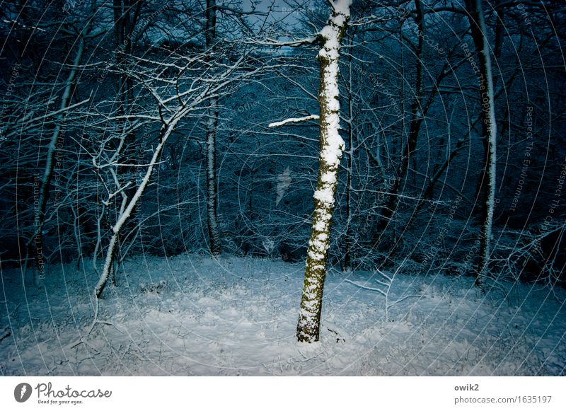 undergrowth Winter Ice Frost Snow Tree Branch Undergrowth Forest Threat Cold Idyll Colour photo Exterior shot Deserted Copy Space left Copy Space right Evening