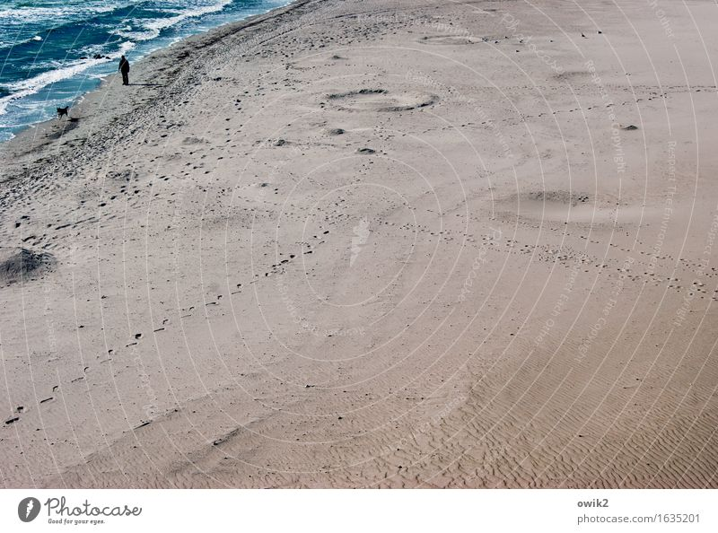 take a dog for a walk Leisure and hobbies To go for a walk Walk the dog Man Adults 1 Human being Environment Nature Landscape Sand Water Climate