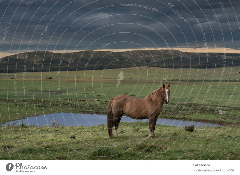 La tostada Equestrian sports Nature Landscape Plant Animal Storm clouds Bad weather Grass Field Hill Pond Horse 1 Observe Stand Esthetic Brown Gray Green Violet