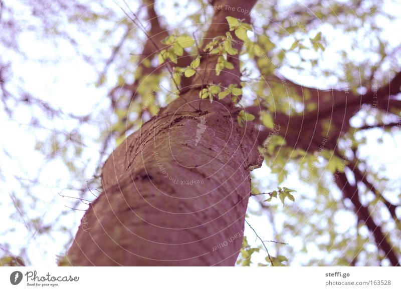 My friend the tree Environment Nature Landscape Spring Summer Plant Tree Leaf Wild plant Park Wood Old Cold Gloomy Brown Green Detail Branch Twigs and branches