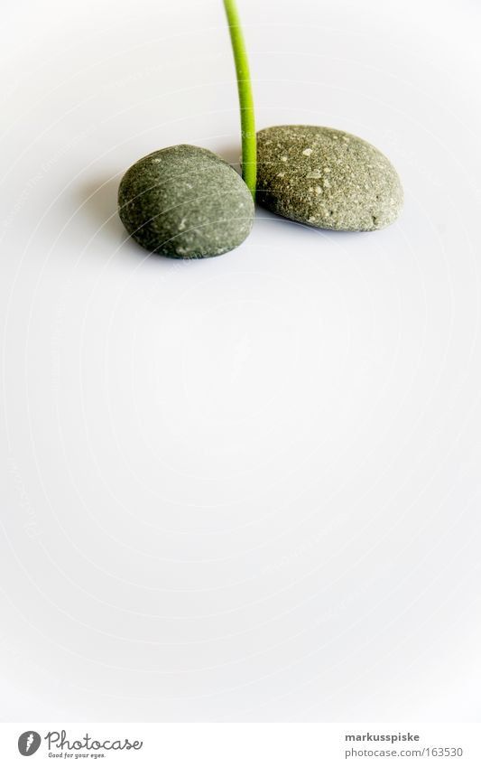 Flower Gray Stone Power Elements Soft Sign Exotic Cliche Foliage plant Muscular Pot plant