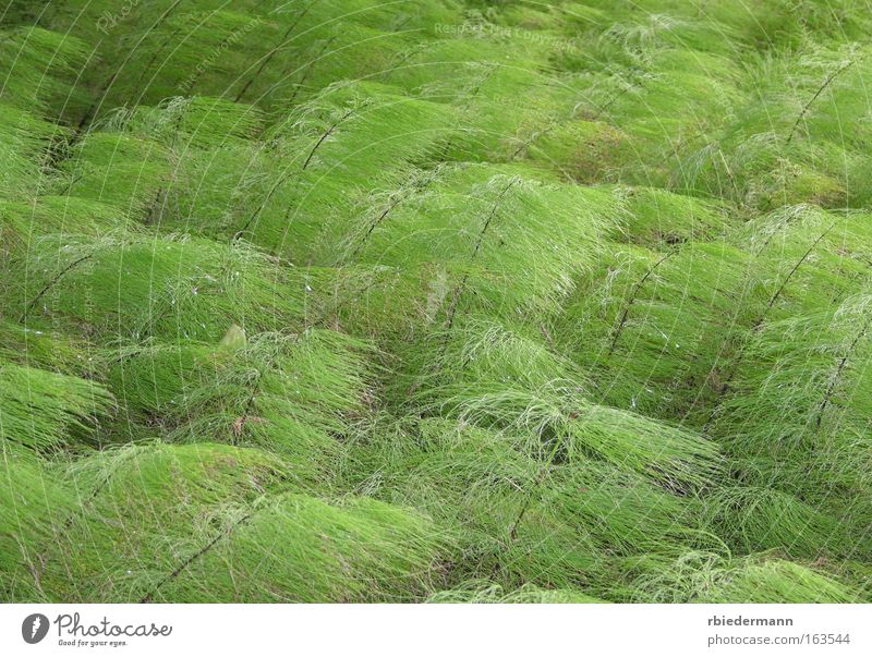 Nature Green Plant Summer Loneliness Contentment Esthetic Soft Natural Ease Wild plant Horsetail