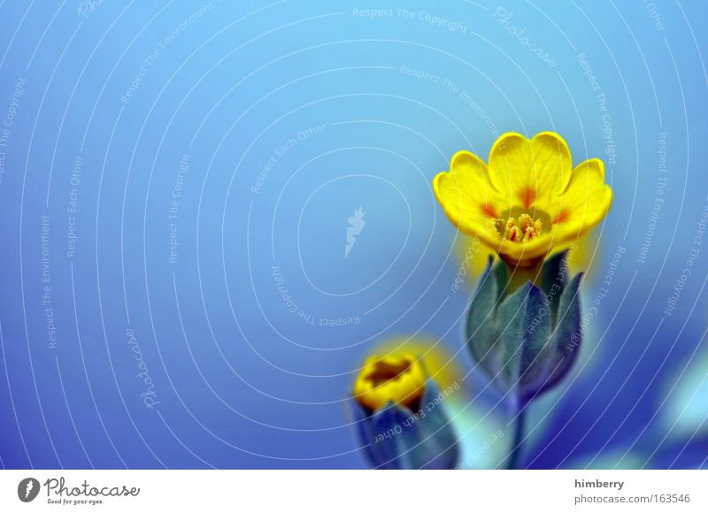 Nature Beautiful Flower Blue Plant Yellow Emotions Happy Dream Park Contentment Moody Small Gold Fresh Happiness