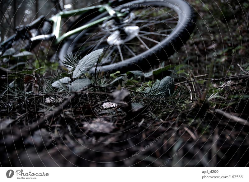 Nature Green Plant Lanes & trails Brown Bicycle Means of transport Mountain bike Woodground