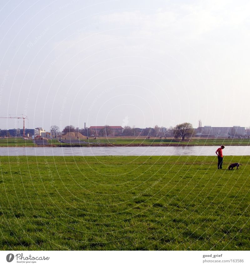 Human being Man Water Summer Meadow Grass Spring Dog River Dresden Crane Elbe