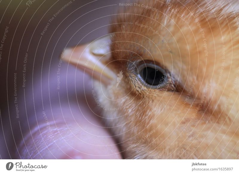 Nature Hand Animal Baby animal Environment Happy Food Bird Contentment Nutrition Happiness Joie de vivre (Vitality) Pet Spring fever Farm animal Chick