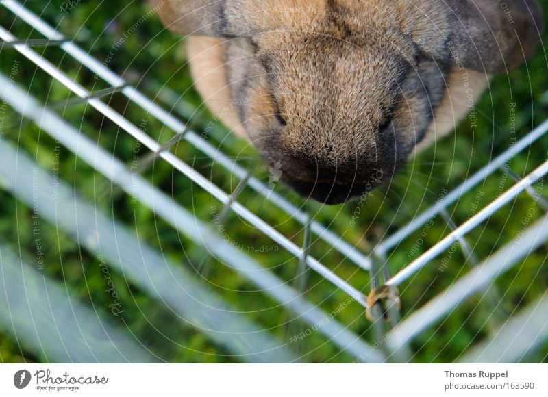 captive Colour photo Exterior shot Day Bird's-eye view Animal portrait Grass Meadow Pet Petting zoo Hare & Rabbit & Bunny Pelt 1 Sit Sadness Safety Protection