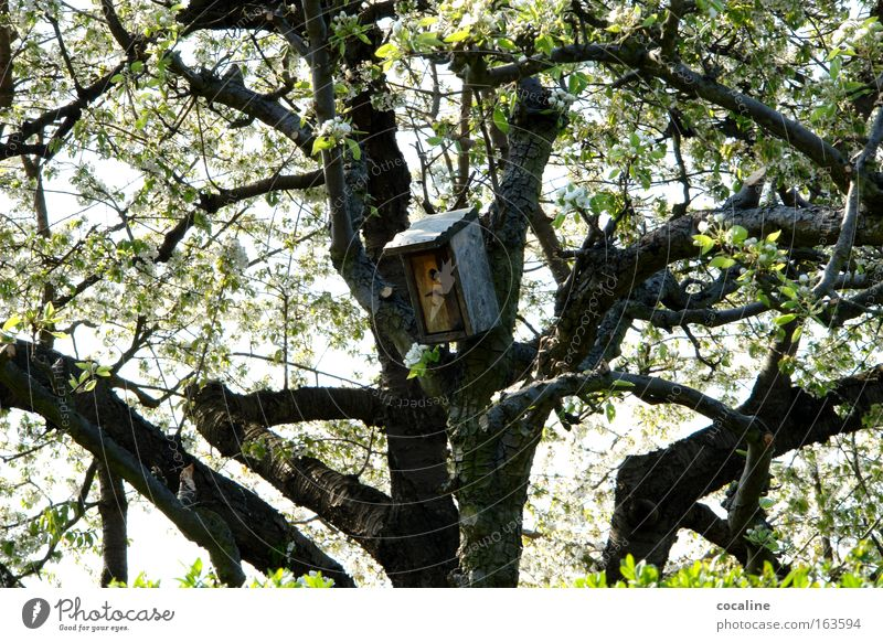 Tree Blossom Spring Warmth Flat (apartment) Branch Blossoming Wake up Nest Birdhouse