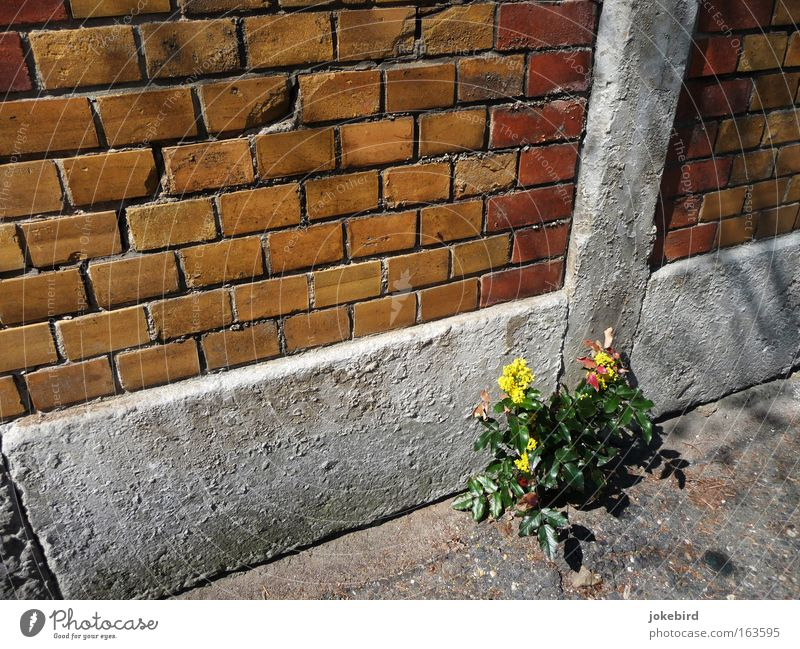 Plant Summer Loneliness Wall (building) Blossom Lanes & trails Wall (barrier) Small Stone Line Facade Bushes Simple Beautiful weather Tilt Brick