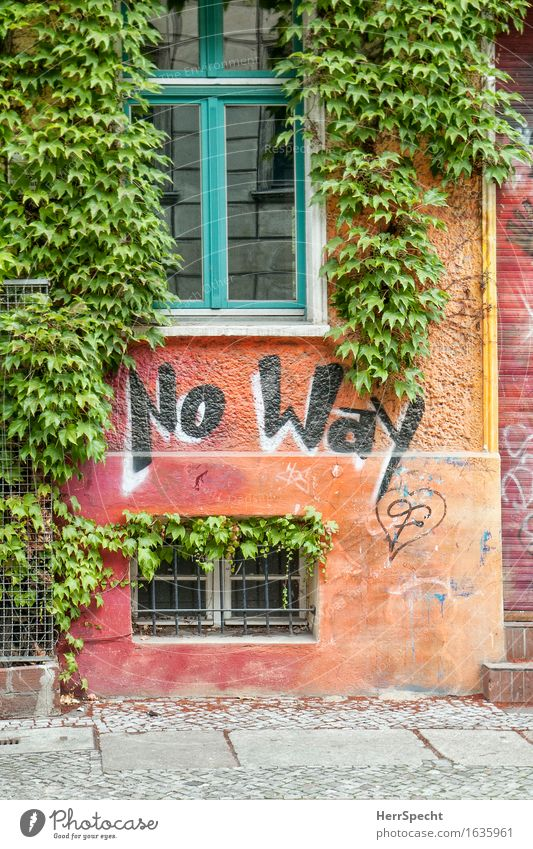 No way Foliage plant Virginia Creeper Berlin House (Residential Structure) Manmade structures Building Wall (barrier) Wall (building) Facade Window Characters