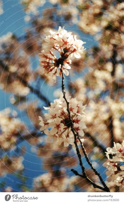 Sky Nature Blue White Green Plant Black Environment Spring Blossom Brown Growth Change Transience Cloudless sky