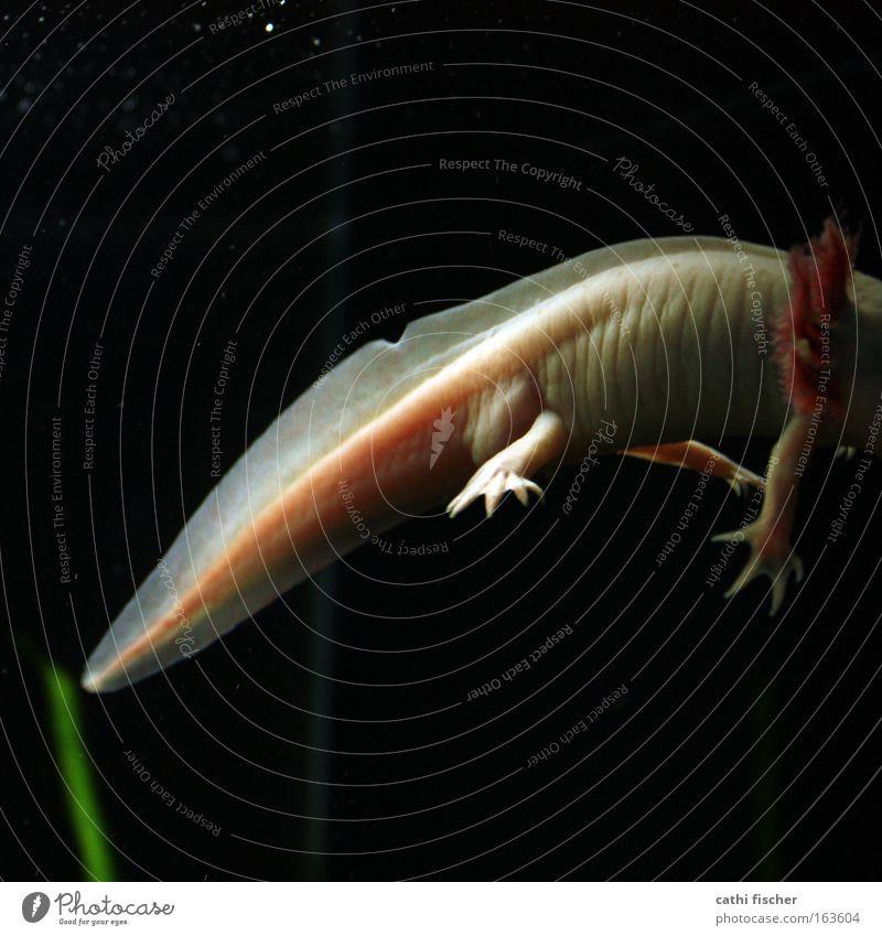 Nature Water White Green Black Animal Dark Underwater photo Pink Fish Soft Zoo Creepy Wild animal