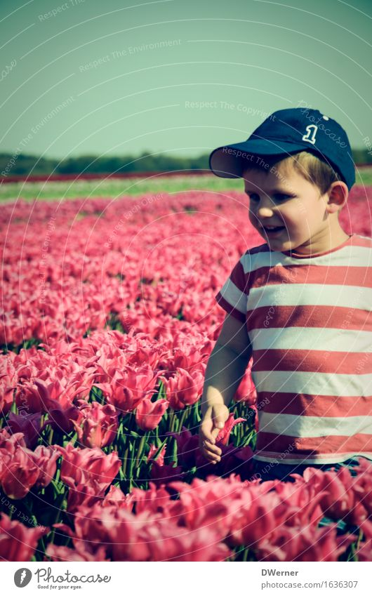 flower lover Trip Freedom Summer Child Human being Boy (child) 1 3 - 8 years Infancy Environment Nature Landscape Plant Sky Spring Beautiful weather Flower