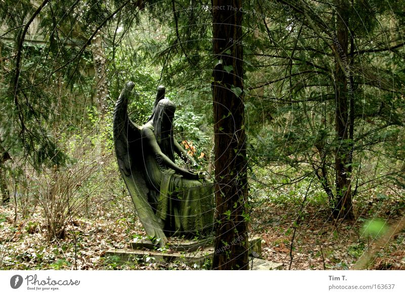 Black Angel Colour photo Exterior shot Deserted Day Art Work of art Sculpture Nature Landscape Plant Earth Beautiful weather Foliage plant Wild plant Garden