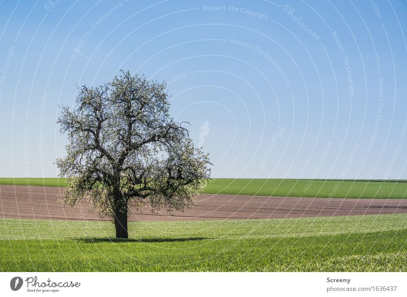 accuracy Nature Landscape Plant Earth Sky Cloudless sky Spring Beautiful weather Tree Grass Meadow Field Blossoming Growth Blue Brown Green Serene Patient Calm