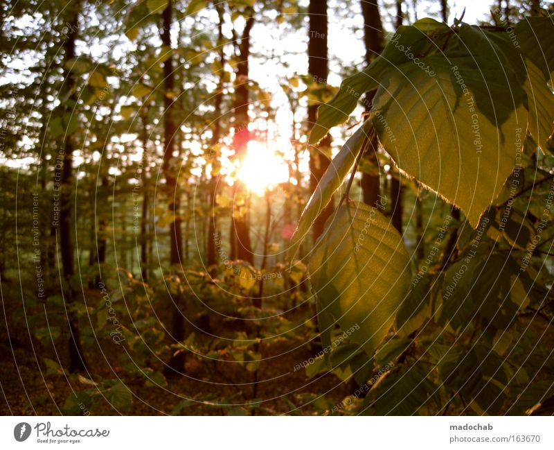 Nature Beautiful Tree Sun Plant Vacation & Travel Forest Relaxation Emotions Mountain Freedom Happy Warmth Landscape Contentment Together