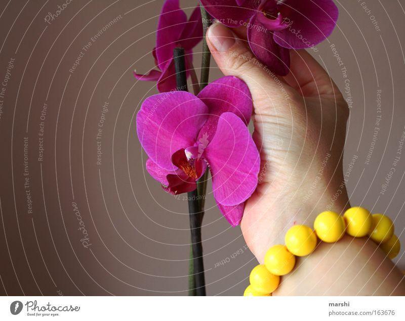 Nature Hand Beautiful Plant Flower Joy Emotions Spring Pink Decoration Violet Fragrance Orchid Bracelet Pick Pot plant