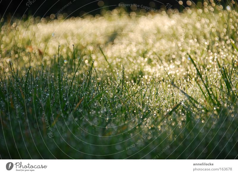 Nature Plant Summer Water Cold Environment Warmth Spring Meadow Grass Rain Park Glittering Fresh Earth Esthetic