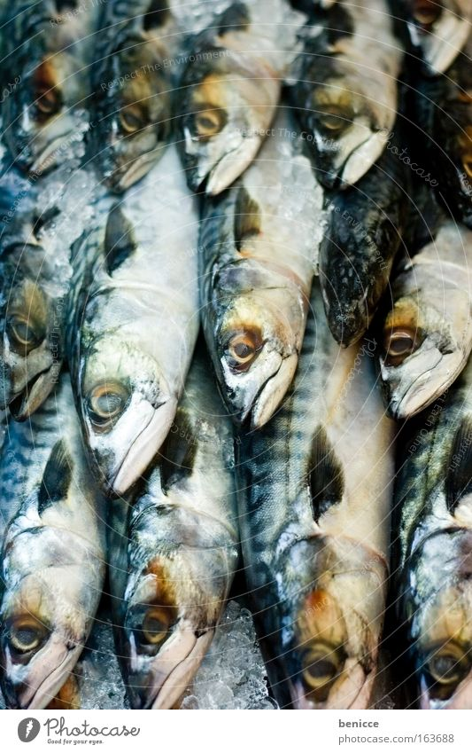 Cold Death Ice Fresh Fish Many Markets Animal Scales Fish market Mackerel Fish restaurant