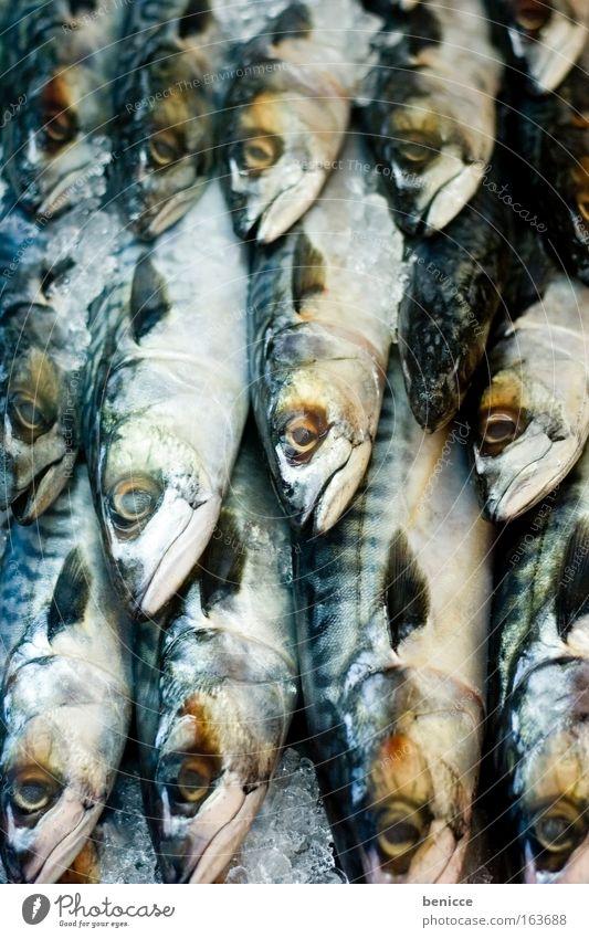 Cold Death Ice Fresh Fish Many Markets Animal Scales Fish market Mackerel Fish restaurant