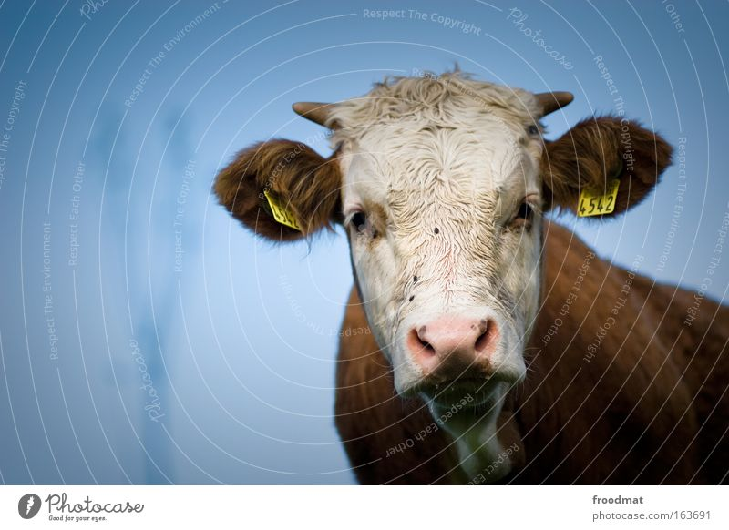 4542 Colour photo Exterior shot Copy Space left Day Shallow depth of field Central perspective Wide angle Animal portrait Upper body Front view Looking