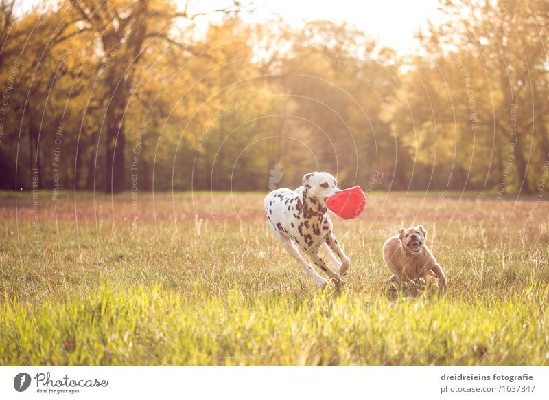 Dog Nature Summer Sun Animal Joy Spring Meadow Movement Natural Healthy Playing Happy Garden Together Park