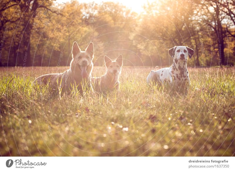 Dog Nature Summer Landscape Animal Spring Meadow Together Friendship Park Elegant Earth Esthetic Sit Success Wait