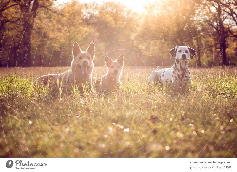 Dogs in summer at sunset Nature Landscape Earth Sunrise Sunset Sunlight Spring Summer Park Meadow Animal 3 Sit Wait Esthetic Elegant Success Together Cute Loyal
