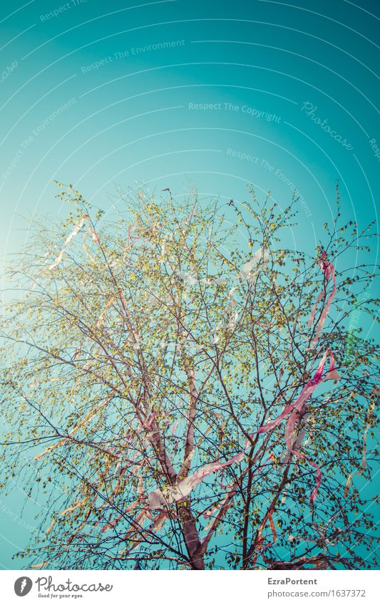 sky may tree flattened Environment Nature Sky Cloudless sky Sun Spring Tree Esthetic Bright Blue Green Red May tree Tinsel Decoration Paper chain Judder