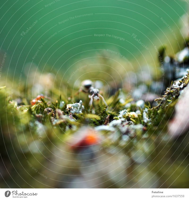 ant Environment Nature Plant Animal Moss Small Near Natural Green Crawl Insect Ant Colour photo Multicoloured Exterior shot Close-up Detail