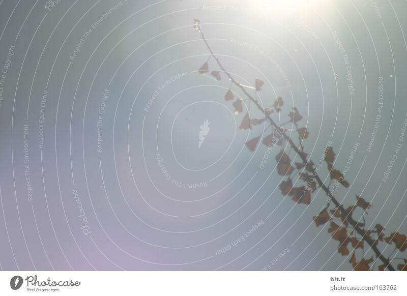 Sky Plant Sun Leaf Calm Relaxation Autumn Air Park Contentment Fog Growth Bushes Branch Delicate Twig