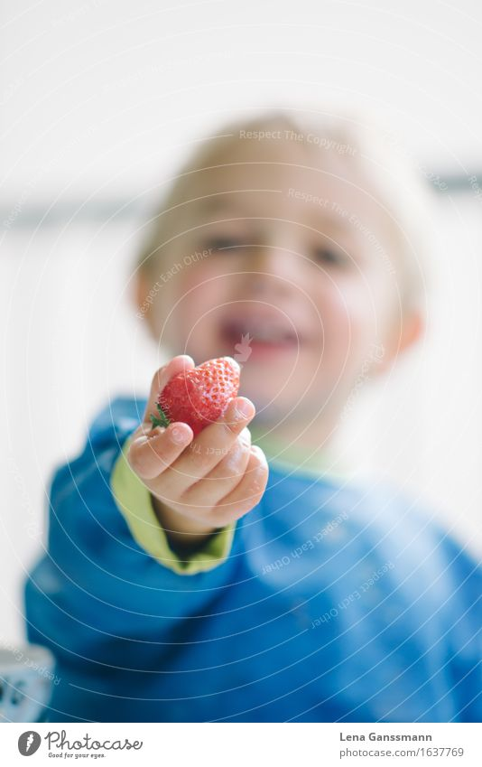 Strawberry time!! Food Fruit Picnic Diet Slow food Healthy Children's game Eating Mother's Day Birthday Kindergarten Toddler Boy (child) 1 Human being