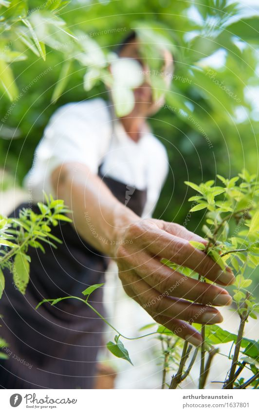 Woman picking herbs Joy Healthy Healthy Eating Life Leisure and hobbies Garden Gardening Cook Kitchen Human being Feminine Adults Hand 1 45 - 60 years