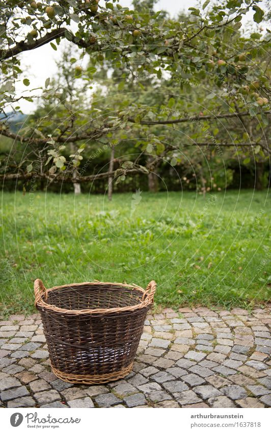 Basket for fruit harvesting Food Fruit Nutrition Organic produce Harvest Healthy Healthy Eating Leisure and hobbies Garden Agriculture Farmer Forestry