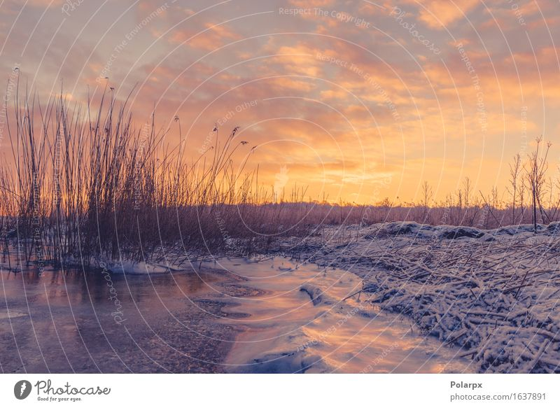 Frozen lake with grass silhouettes in the sunrise Beautiful Sun Beach Ocean Winter Snow Environment Nature Landscape Plant Sky Clouds Grass Coast Lake River