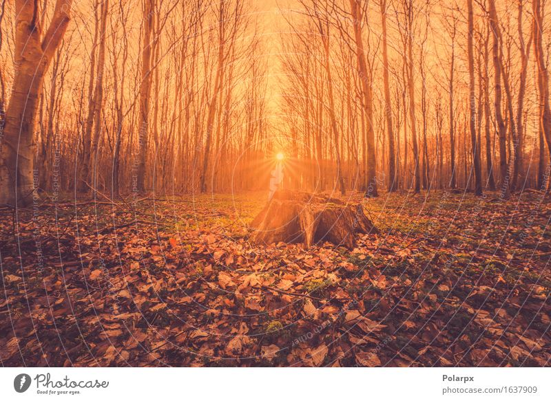 Fairytale sunrise in a forest with a tree stump Beautiful Summer Sun Environment Nature Landscape Autumn Fog Tree Leaf Park Forest Street Bright Green Clearing