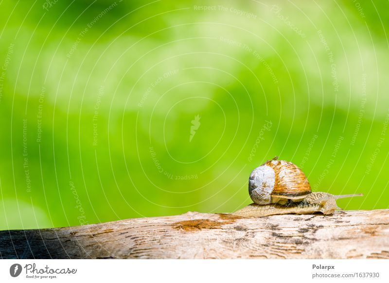 Snail in a forest at springtime crawling in a wooden branch Beautiful Life Summer House (Residential Structure) Wallpaper Environment Nature Animal Warmth Tree