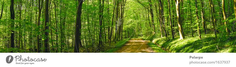 Road in a green forest panorama scenery in the spring Summer Sun Environment Nature Landscape Plant Spring Tree Leaf Park Forest Street Bright Natural Wild