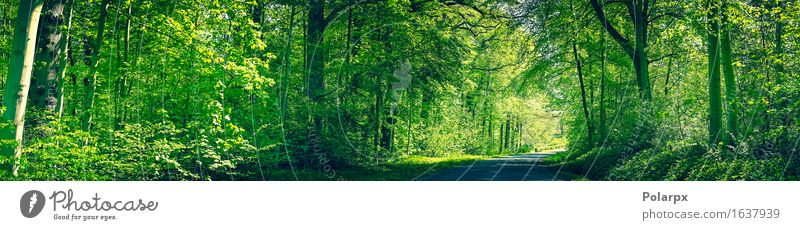 Forest in green colors with a road in the spring Summer Sun Environment Nature Landscape Plant Spring Tree Leaf Park Street Bright Natural Wild Green Serene