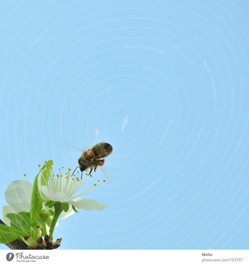 Sky Nature Blue Plant Green White Animal Environment Spring Blossom Flying Work and employment Wild animal Blossoming Beautiful weather Cloudless sky