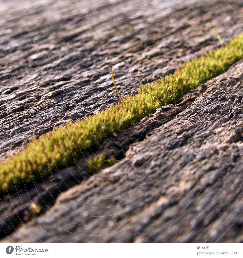 The way to the moss Colour photo Subdued colour Exterior shot Detail Macro (Extreme close-up) Moss Bog Marsh Wood Growth Diagonal Wetlands Putrefy