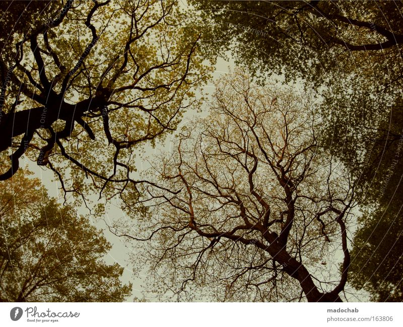 A kingdom for a treetop Colour photo Subdued colour Deserted Twilight Worm's-eye view Wide angle Environment Nature Plant Autumn Tree Leaf Forest Sadness Grief