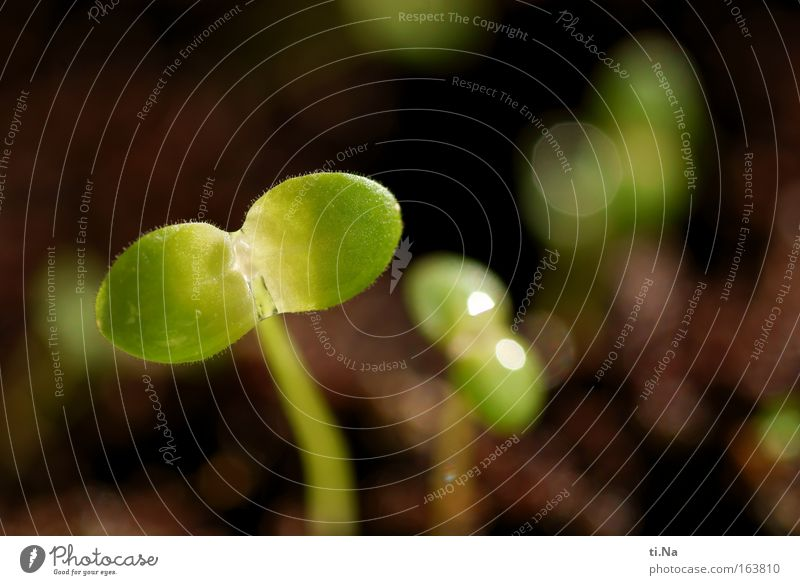 Nature Green Plant Flower Calm Environment Life Meadow Spring Brown Earth Wild Beginning Drops of water Esthetic Growth