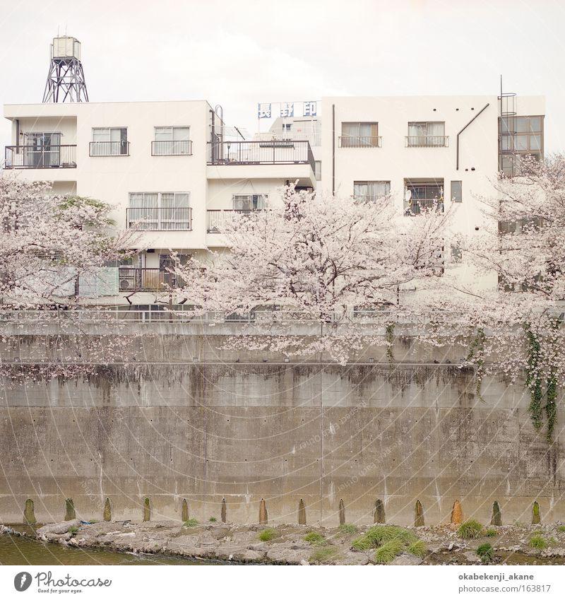 sakura #6 House (Residential Structure) Blossom Spring Art Environment Serene