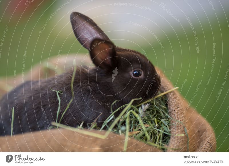 Green Summer Relaxation Animal Black Baby animal Meadow Grass Small Garden Brown To enjoy Cute Soft Curiosity Easter