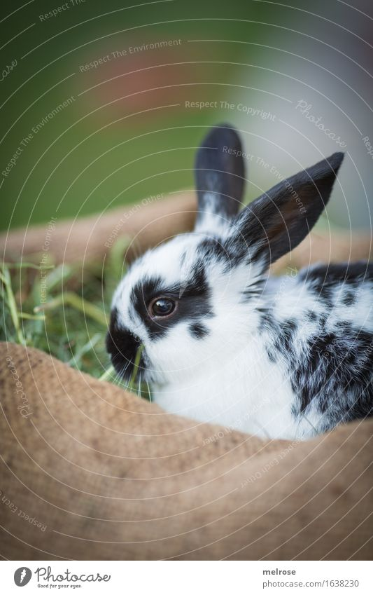 Green White Relaxation Animal Black Baby animal Meadow Small Garden Brown Sit To enjoy Cute Soft Easter Safety