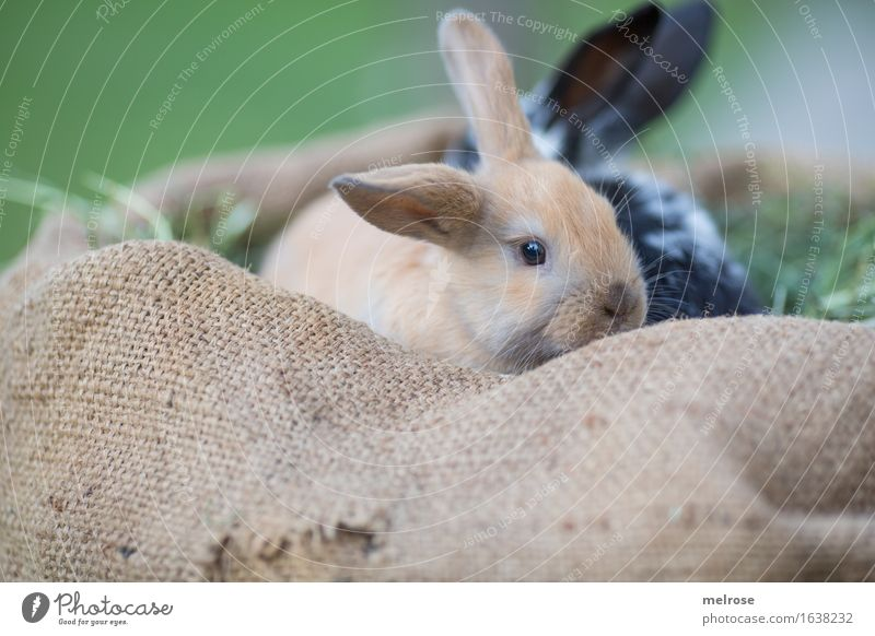 Green White Relaxation Animal Black Baby animal Meadow Small Brown Together Pair of animals To enjoy Cute Soft Curiosity Easter
